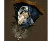 Peregrine Falcon - Original Acrylic Painting on Feathers