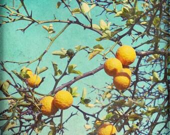 Botanical photography print orange teal fruit tree kitchen dining room wall art - Strange Fruit