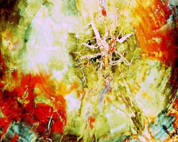 Petrified Wood, Photo Abstract, fossilized tree, mineral, quartz,  nature fine art autumn abstract art decor rust yellow cream