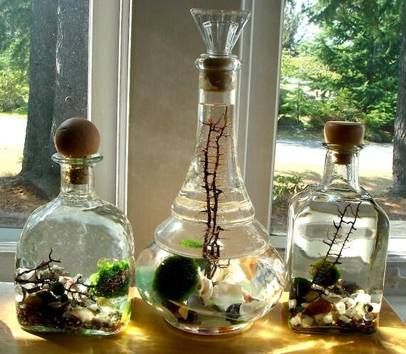 Tall Genie Bottle Decanter Live Marimo Ball Zen Pet Terrarium
