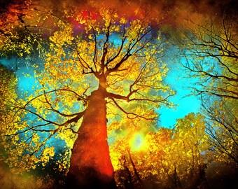Night sky,11x14, art, photography, nature, Michigan autumn, tree art, Fine art photograph, Autumn trees, Fall decor, Nature decor, wall art