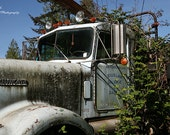 Old Kenworth Logging Truck in the Brambles photograph
