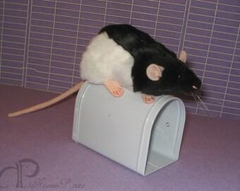 Black Hooded Rat Plushie