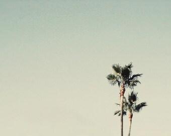 BUY 2 GET 1 FREE California Photography, Palm Trees, Beach Decor, Wall Decor, Office, Home, West Coast Photos - Sea Green Palms