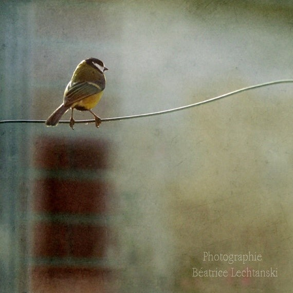 "Bird photograph. ""At the window, a bird..."" Fine art photography print. 8x8 (20x 20cm)"