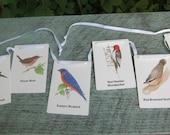 Bird flash cards Bunting