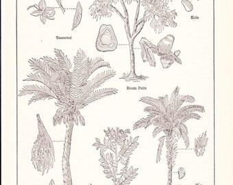 1909 Africa Plants Print - Vintage Antique Home Decor Art Illustration for Framing 100 Years Old