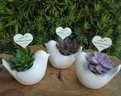 12 Succulent Plant Rosette Ceramic Bird Dove Favors and Tags for Wedding, Shower, Baptism or Any Special Event