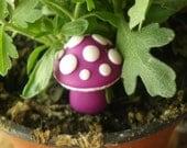 Little purple mushroom