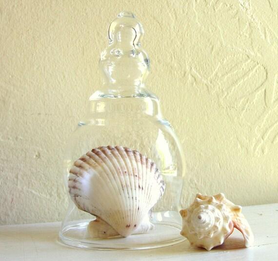 Small Curvy Clear Glass Cloche Decorative Dome