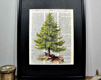 FRAMED Vintage Dictionary Print - Woodland Series - Evergreen Tree