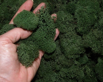 Dark Green Reindeer moss-Deer foot moss 2 oz bag of Fluffy Lichens-Preserved Lichens-Assorted sized spongy soft balls