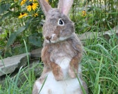 OOAK Needle felted Alpaca Life Size Cottontail Bunny Rabbit  Hare Poseable Artist doll