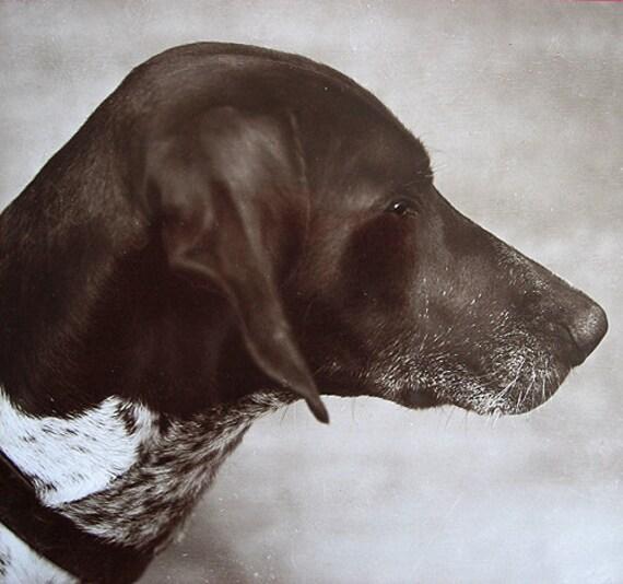 Vintage dog photo postcard, hunting dog, 1910