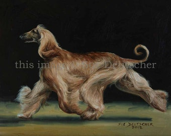 Afghan sight hound dog 11x14 print