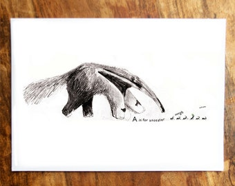 A is for Anteater Card