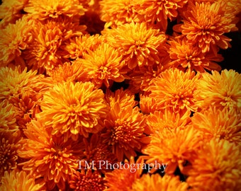 Flower photography print - Orange Flower - Orange - Nature photography - Fine Art photography - wall art