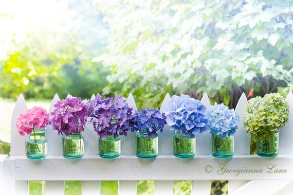 Custom Listing 2 for Patricia - Hydrangeas on Fence Fine Art Photograph 24 x 36