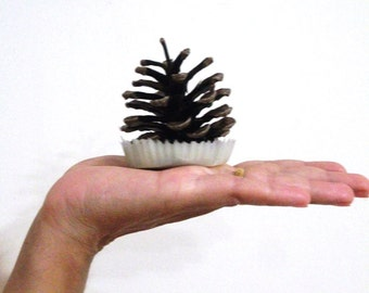 PINECONE FIRE STARTERS - Set of 12, Available in custom colors, unscented or scented, you choice scent