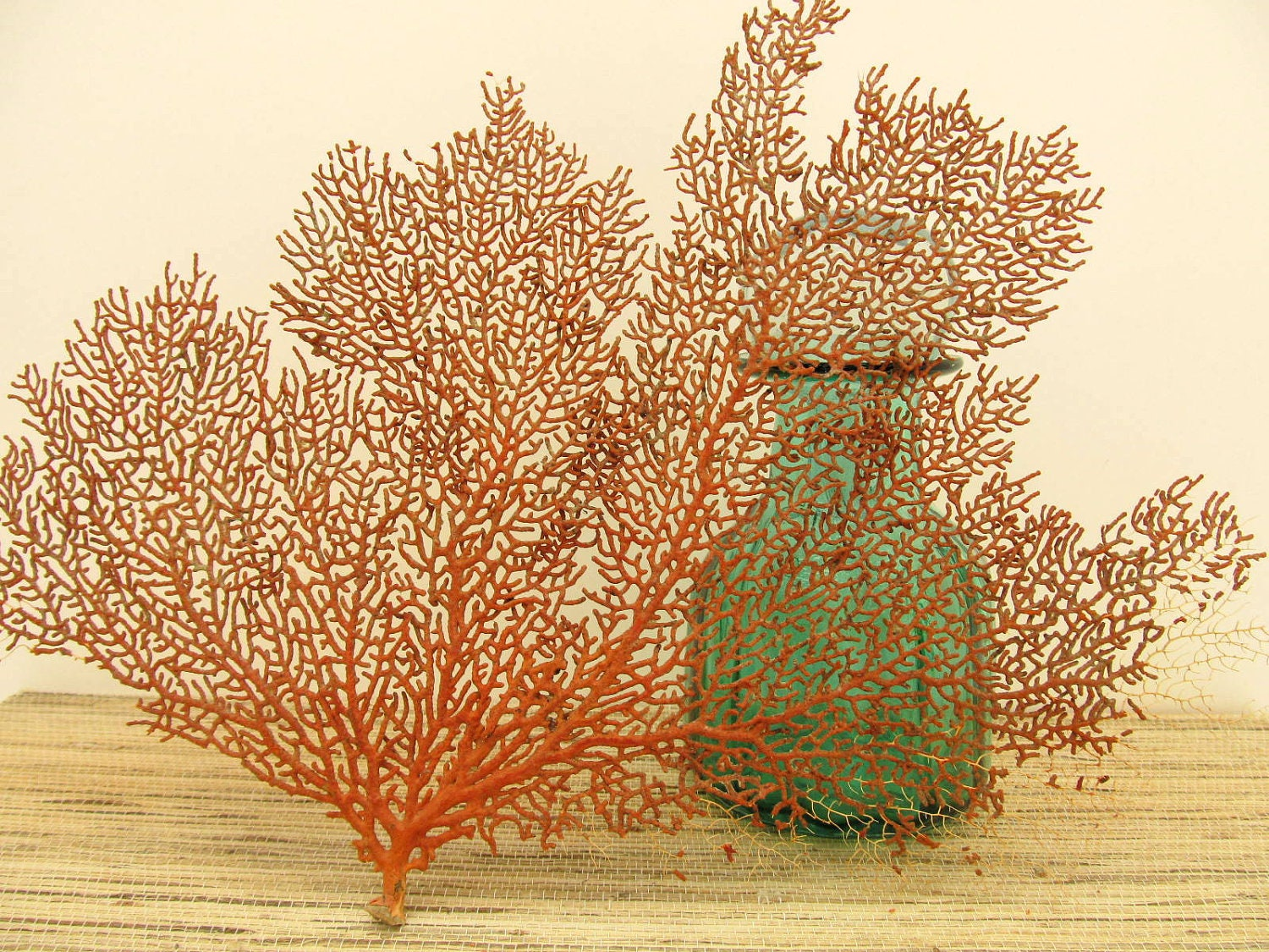 Red Sea Fan Coral Beach Decor Number 15. Turquoise And Grey Decor. Bed Room Chairs. Decorative Dog Gates. Baby Shower Decorations Stores. Red Sofa Living Room. Italian Kitchen Decor. Shutter Decorations. Office Decorations