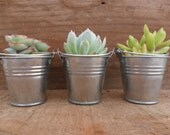 40 Succulents And Silver Or White Pails, As Seen On HGTV.COM, Rustic Wedding Party Favors, Special Event