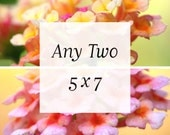 Any Two 5x7 flower photography prints, photo set of 2, nature photography, floral art home decor, botanical fine art pair