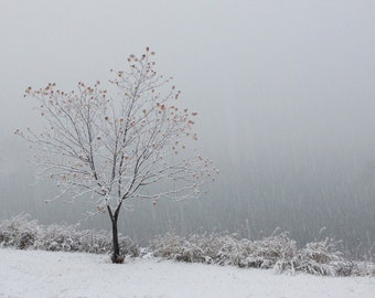 Monochromatic Landscape Snow Photography Nature Photography Zen Wall Art Silver Metallic