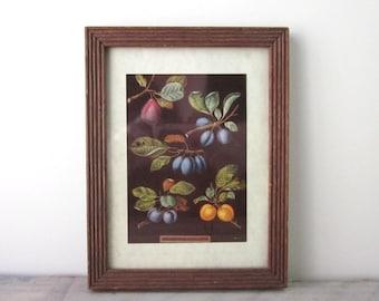 Fruit Print in Brown Wood Frame