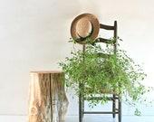 Fir You - Stump Table