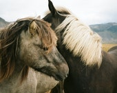 Iceland landscape photograph with horses (film)