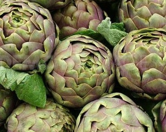 Artichoke, Romanesco Artichoke Seeds - Delicious, Flavorful  Italian Artichoke