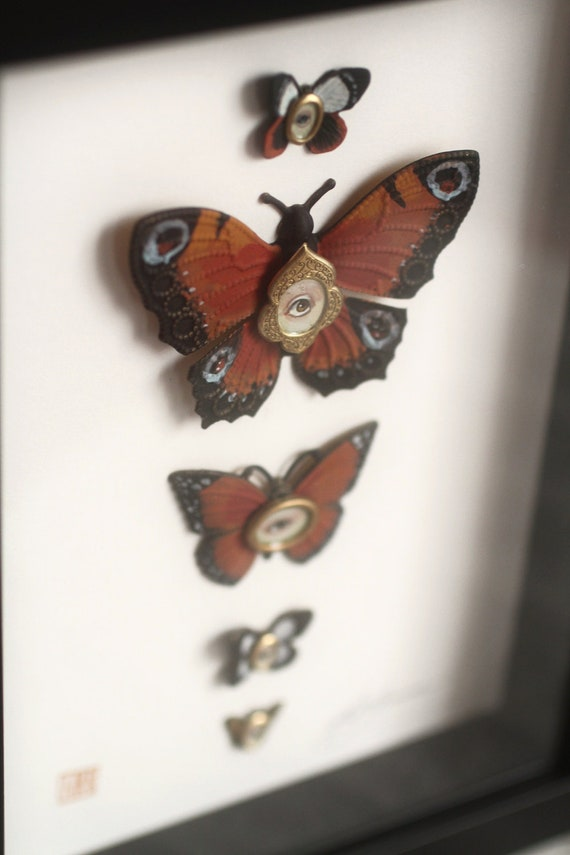 Cabinet of Curiosities Specimen no. 16 - The Autumn Moth Eye Flies - original 3D insect paintings by Mab Graves