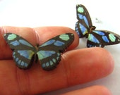 Sweet, Pair, wooden, blue and black, butterfly, stud earrings, by NewellsJewels on etsy