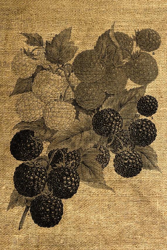 INSTANT DOWNLOAD Berries Vintage Illustration - Download and Print - Image Transfer - Digital Sheet by Room29 Sheet no. 652