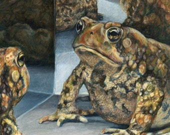"""Reflection - Toad in Mirror Giclee Print 5x5"""" Matted to 8x10"""""""