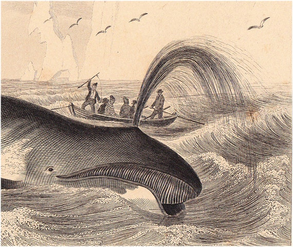 1869 antique WHALE engraving of a whale fishing scene in the artic by Charles D'Orbigny and Edouard Traviès, 143 years old nice fine print