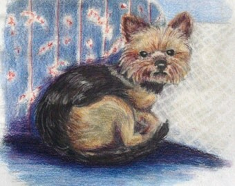 Yorkie Drawing, Colored Pencil Art, Dog Art, Original Canine Colored Pencil Art