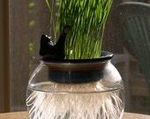 hydroponic cat grass wheat grass planter