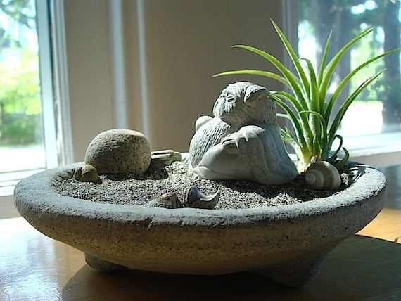 sale stone bowl airplant terrarium with lucky pug buddha. Black Bedroom Furniture Sets. Home Design Ideas
