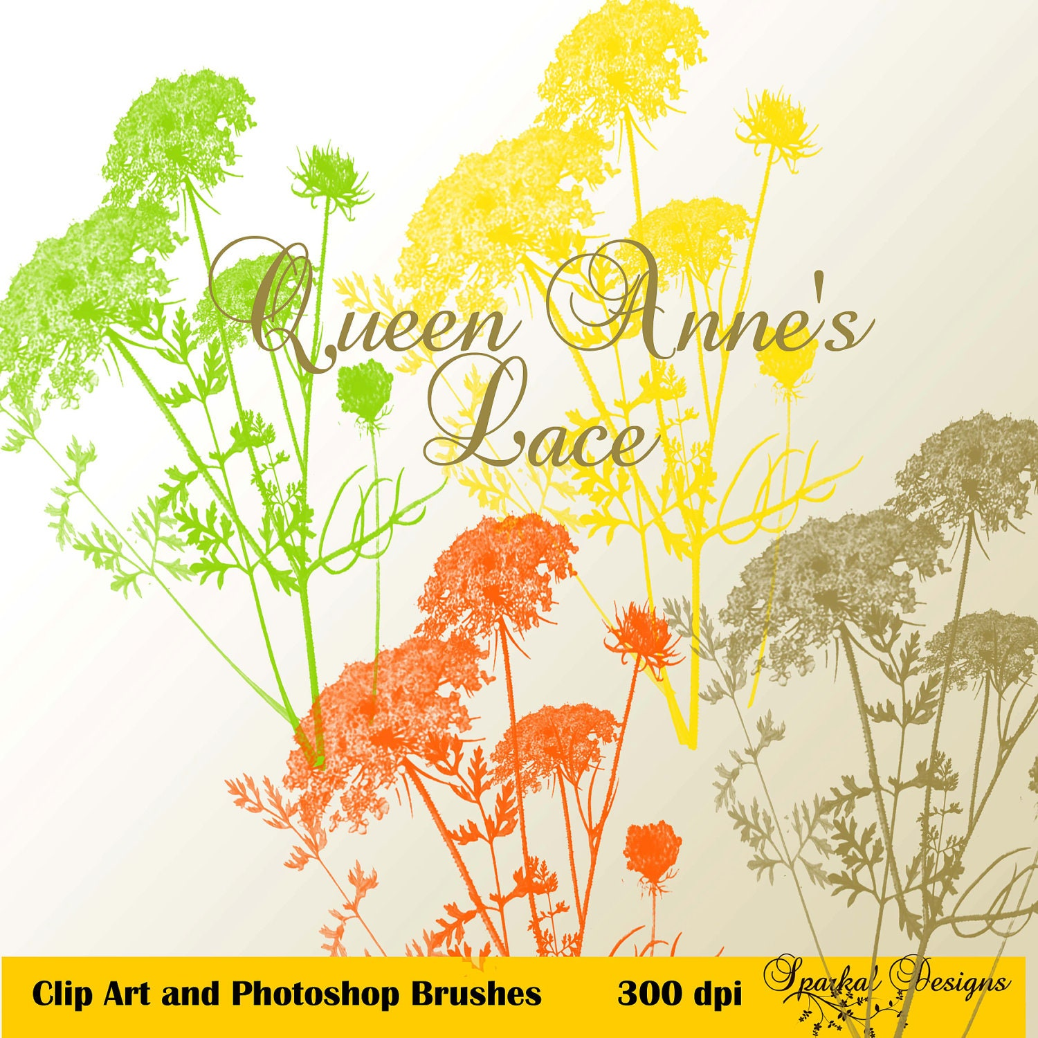 Queen Anne's Lace (Wild Carrot)