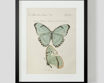 Butterfly Plate 4