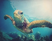 Ocean photograph: Turtle Power - 5x7 sea turtle photo in blue