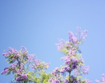 Jacaranda Tree I - 8x10 Fine Art Photograph