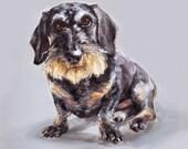 Dachshund dog art print - Ltd. Ed Collectable No.11