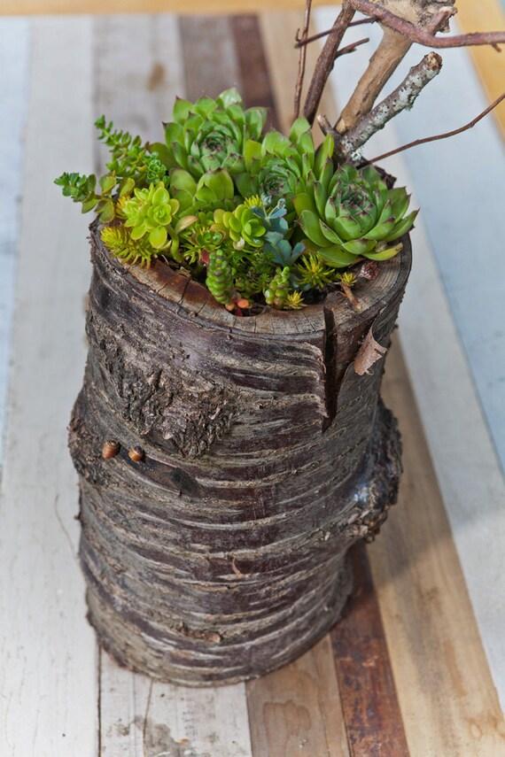 Large / re-BEAM Planter on cherry stump with Succulent Arrangement