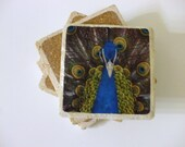 Various Peacock Images Themed Coasters Set of 4