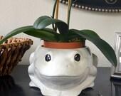 SALE: Ceramic Frog Planter Home Accessories Gift , White