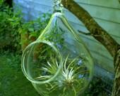 hand blown glass plant globe hanging terrarium