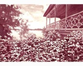 Wine Painting - 'Late Afternoon Sun Over A Lake of Flowers
