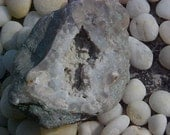 Reduced FOSSiL CRINOID CALYX Geode FREE SHiPPiNG Sale